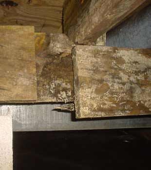 Extensive basement rot found in Warner Robins by Lowcountry Basement Systems