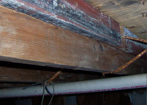 Rotting, decaying wood from mold damage in Claxton